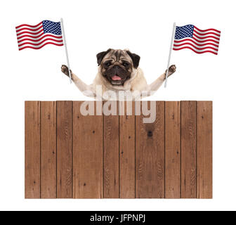 pug puppy dog with American National flag of USA and wooden fence, isolated on white background - Stock Image