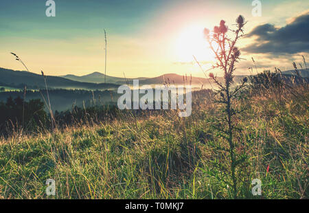 Thistle in the sunset at the meadow.  Silent evening nature - Stock Image