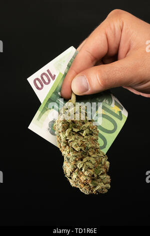 Closeup of man holding money bills and marijuana bud with fingers as drug dealer concept isolated on black - Stock Image