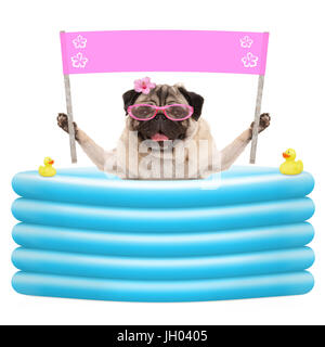 happy summer pug dog with sunglasses and blank pink banner sign in inflatable pool, isolated on white background - Stock Image