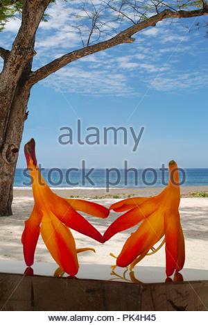 Tropical flowers on idyllic beach - Stock Image