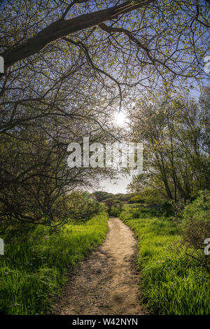 The sun shines through tree branches and leaves on a hiking trail in California. - Stock Image