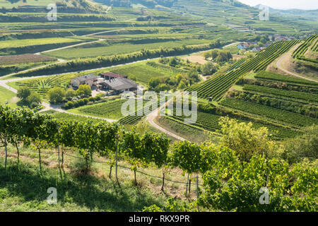 Schatzle winery surrounded by vineyards growing on volcanic terraces in the Kaiserstuhl wine district in the Baden wine region of southwestern Germany - Stock Image