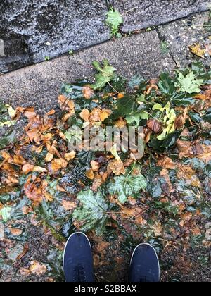 Wet autumn day. Green, orange and brown wet leaves on the ground with blue shoes standing over them - Stock Image