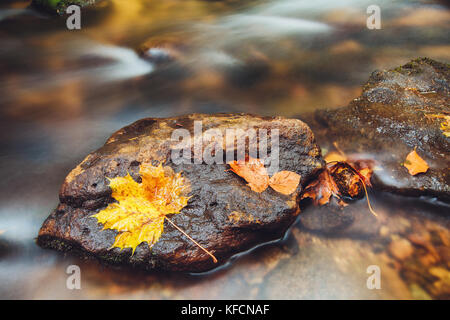 stone in river Kamenice in autumn with long exposure, Bohemian Switzerland, Czech Republic - Stock Image