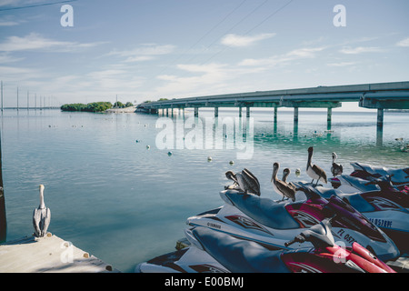 Some Pelicans on Jet Ski's at a dock at Robbie's of Islamorada in Lower Matecumbe Key. - Stock Image