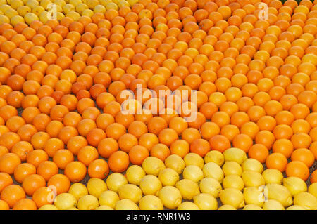 February 16th 2019 Menton, France,  the 86th LEMON FESTIVAL (les mondes fantastiques : pattern of lemons and oranges) during the Carnival of NICE - Stock Image