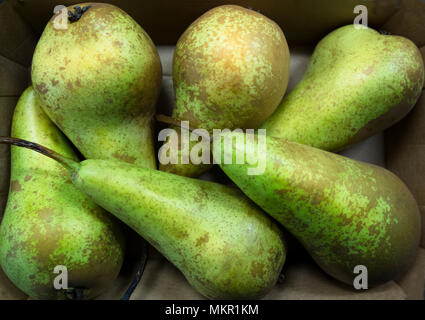 Six conference pears - Stock Image