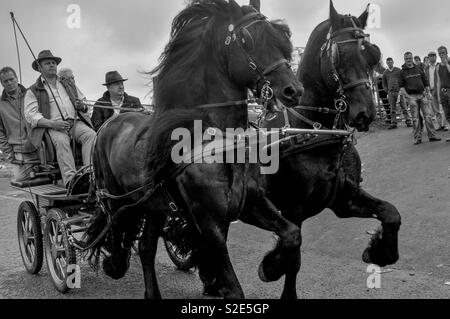 Taking the horse cart into town - Stock Image
