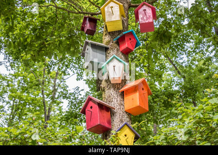 Manmade colorful nests hang on tree.Handmade wooden birdhouse on a tree for bird protection.Spring scenery with bird nesting box on a tree - Stock Image