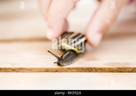 Hand holding snail, close-up - Stock Image