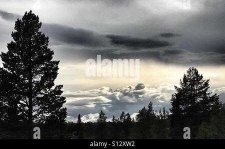 Contrasted trees and dramatic sky - Stock Image