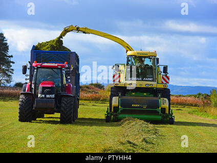 Gathering cut hay ready for the silage pit and will be used as Winter feed for the cattle herd near Inverness, in the Scottish Highlands UK. - Stock Image