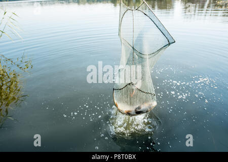 Catching fish with fishing net in the lake during the morning light - Stock Image