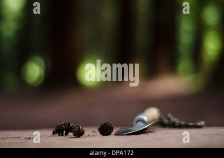 Close up of gardening trowel next to some pine cones on a tree stump in forest , illustrating tree conservancy- with copy space - Stock Image