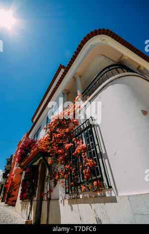 Whitewashed house in Cascais, Portugal covered in colourful bougainvillea. - Stock Image