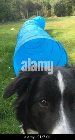 Fun dog picture - Stock Image