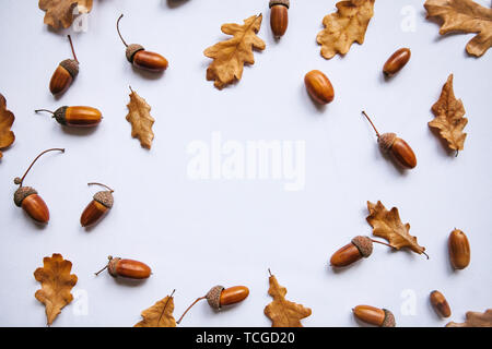 Autumn leaves and acorns on a white background. Abstract autumn background. In the middle there is a place for text. - Stock Image