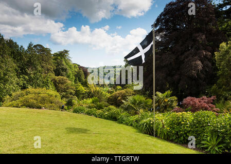 The St Piran flag flying over Trebah Garden in Cornwall. - Stock Image