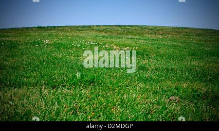 grassy hill in summertime - Stock Image