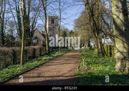 Tree lined path to the church of St John the Baptist in the village of Chelveston, Northamptonshire, UK; - Stock Image