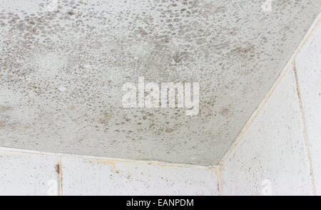 Ceiling mould shown on the interior of a white tiled bathroom a common source of unhealthy damage and decay. - Stock Image