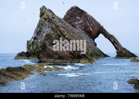Bow Fiddle Rock arch in sea in Moray Firth with seabirds nesting in May. Portknockie, Moray, Scotland, UK, Britain - Stock Image