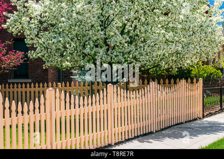 Off white wooden picket fence; Cherry & Crabapple Trees in full springtime bloom; Salida; Colorado; USA - Stock Image