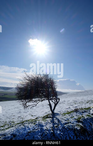 snow covered sussex downs with a windswept solitary small tree in the middle, a star burst sun is in the middle of a blue sky, white snow lays on the  - Stock Image