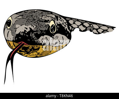 Computer drawn colour illustration of the head of a European Smooth Snake (Coronella austriaca) head-on with outstretched tongue. - Stock Image