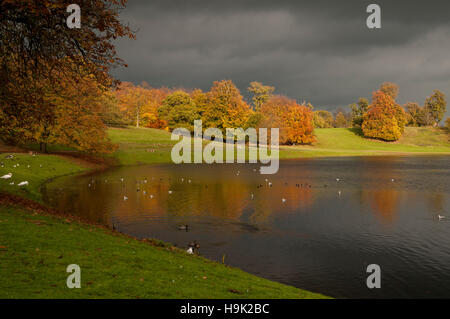 Autumn colours under a stormy sky around the main lake at Studley Royal, Ripon, North Yorkshire. November. - Stock Image