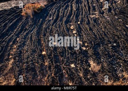 Pahoehoe lava field, Carrizozo Malpais lava flow at Valley of Fires, Tularosa Basin near Carrizozo, New Mexico, - Stock Image