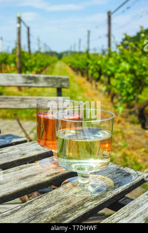 Rose and white wine tasting on Dutch vineyard in North Brabant, Netherlands - Stock Image