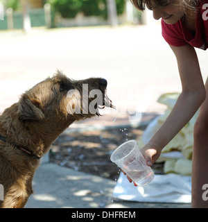 11 year old girl giving a dog a drink of water from a plastic cup on a very hot day - Stock Image