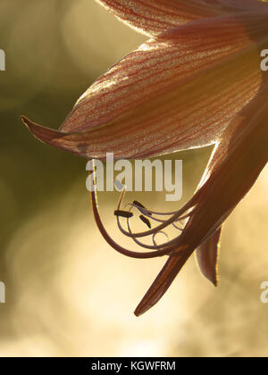 A background with a closeup view of the pollen of a tropical flower at dusk. - Stock Image