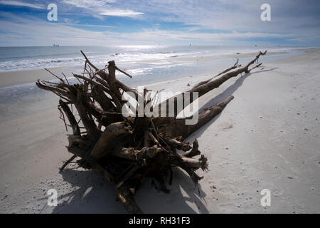 Log washed up on the beach at Fort Morgan, Alabama. - Stock Image