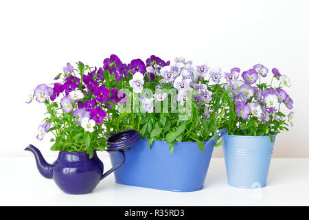 Pansy flowers in shades of lilac, violet and blue in 2 pots and a vintage enamel jug on white background, copy or text space - Stock Image