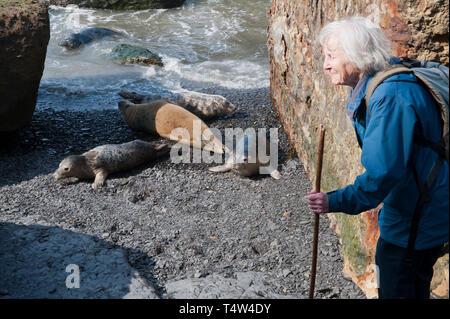 Elderly couple watching the seals at Ravenscar, North Yorkshire, UK - Stock Image