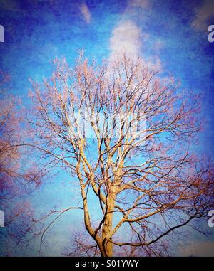 Bare tree and clouds. - Stock Image