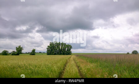 Summer rural country road between two fields - Stock Image