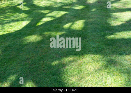 Abstract shadows from trees on a grass lawn in the UK - Stock Image