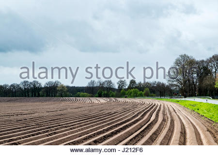 Plowed field prepared for planting of asparagus in northwestern Germany - Stock Image