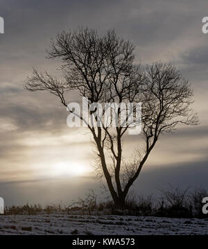 An exposed lone tree having lost its Summercrop of leaves faces the rigors of a Scottish winter weather. - Stock Image