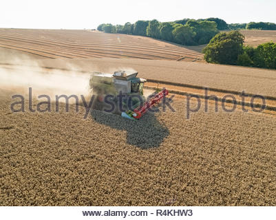 Harvest aerial combine harvester and summer wheat field farm crop - Stock Image