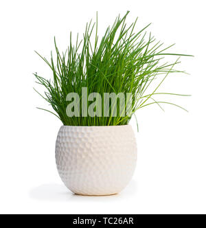 Chives  plant in pot isolated on white - Stock Image