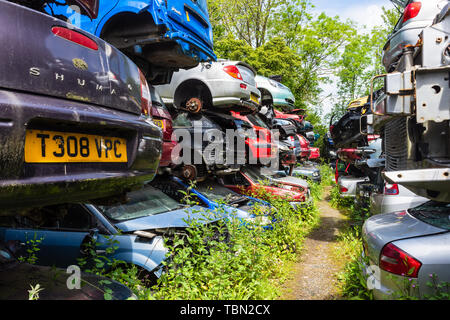 Cars with their wheels removed are stacked in rows of piles of 3 cars with paths between them in a breakers scrap yard - Stock Image