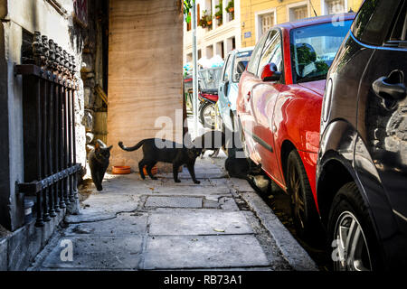 A group of stray cats look for food on a sidewalk in the Plaka district of Athens, Greece. - Stock Image