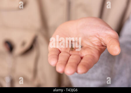 Fisherman showing fishing fly hook in hand palm . - Stock Image
