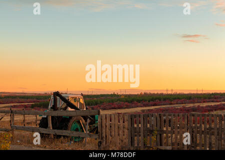 Farm. The green field and a tractor behind a fence - Stock Image