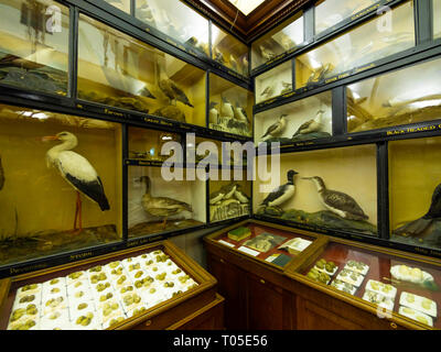 Dorman Memorial Museum Middlesbrough detail of the Thomas Nelson Room a Victorian collection of stuffed birds and eggs bequeathed in 1914 - Stock Image